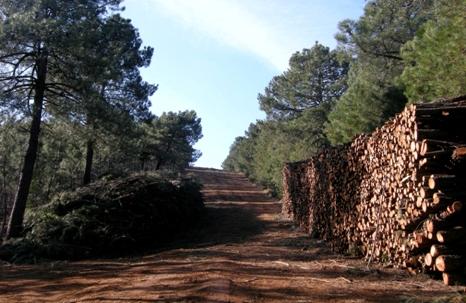 madera_biomasa2