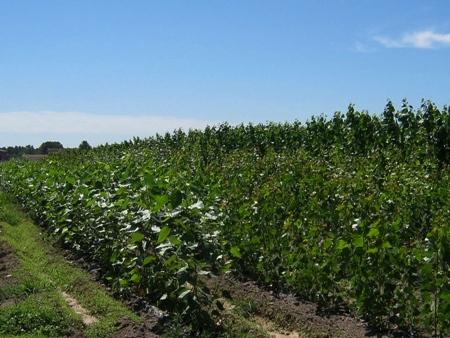 plantas biomasa