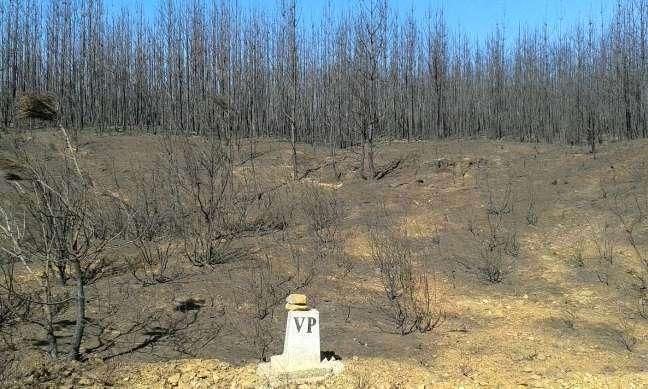 Monte quemado en Perales del Puerto el 17-08-2015